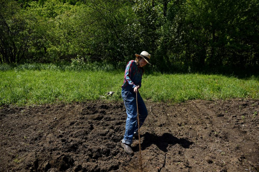 Taylor Katz tugs on a root while hand-tilling a plot of land at Free Verse Farm in Chelsea, Vt., on June 6, 2015. Katz and her husband, Misha Johnson, grow herbs on the farm.  (Valley News - Jennifer Hauck) <p><i>Copyright © Valley News. May not be reprinted or used online without permission. Send requests to permission@vnews.com.</i></p> - Jennifer Hauck | Valley News