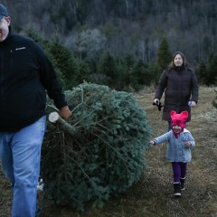 Business of Agriculture: Money Grows on Christmas Trees — Slowly