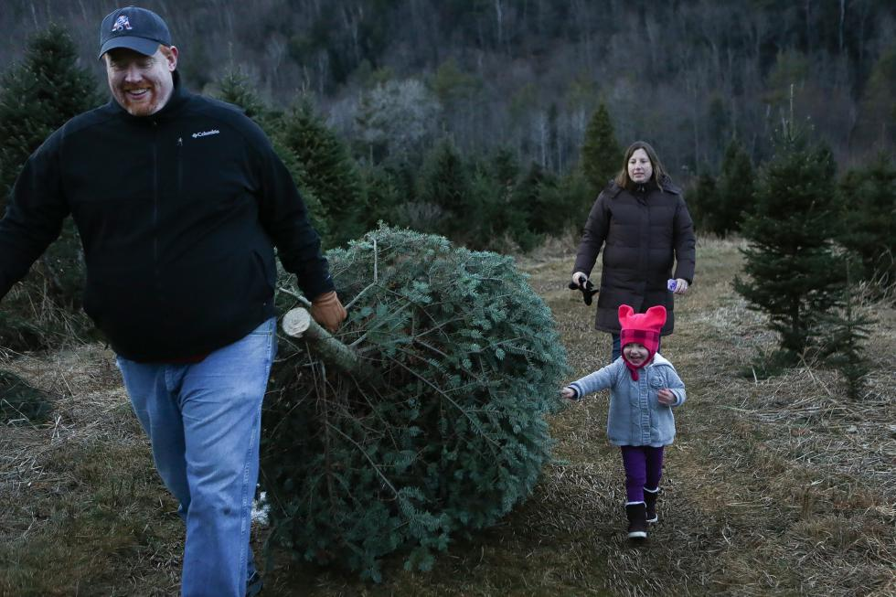 Sam Kippenberger, of Grantham, N.H., drags a balsam fir that he and his wife Kelly chose to be their Christmas tree, accompanied by daughter Gracie, 2, at Nichols Tree Farm in Lyme, N.H. on December 4, 2013. The family drove up from Grantham to Nichols because friends recommended it. (Valley News - Elijah Nouvelage) - Elijah Nouvelage |