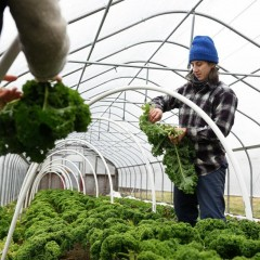 Business of Agriculture: Winter Greens