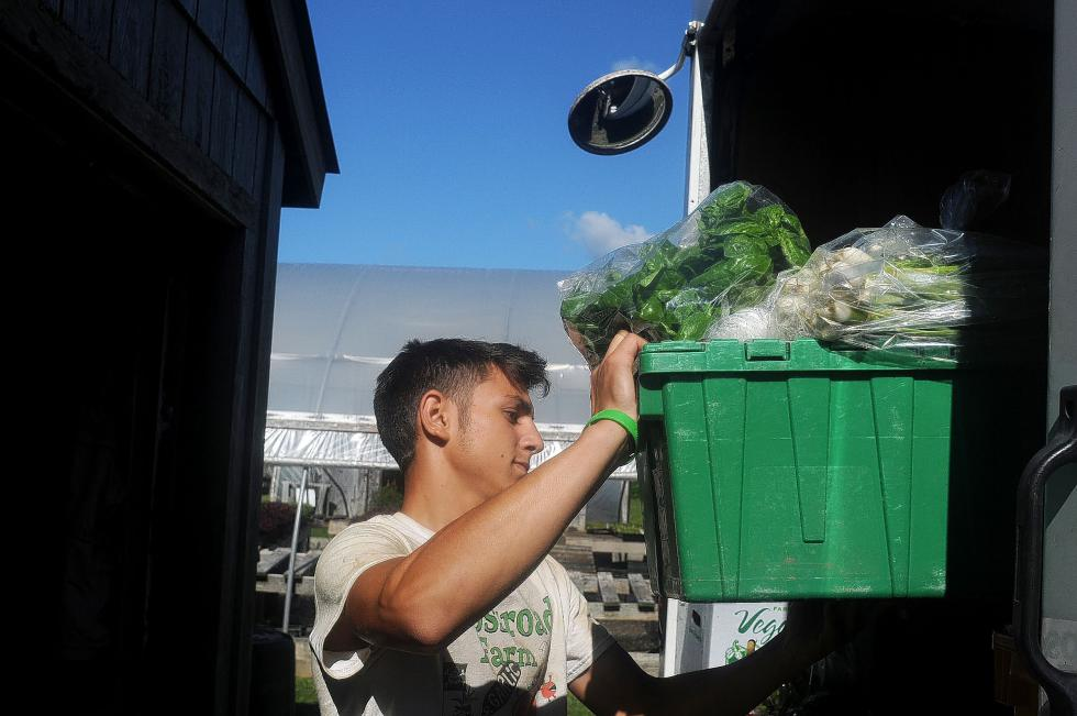Leo Charuhas, 16, of Newbury, Vt., loads a box of fresh herbs and produce into a delivery truck destined for the Woodstock Farmers Market while at Crossroads Farm in Thetford, Vt., on July 30, 2013. (Valley News - Sarah Priestap) - Sarah Priestap | Valley News
