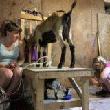 Cottage Industry: Longtime Farmer Builds Goat Milk Soap Business