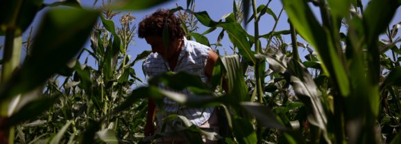 Business of Agriculture: Stalking the Sweetest Sweet Corn