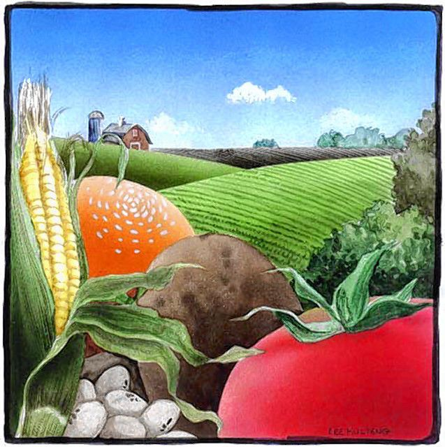 Size as needed (160 dpi, 24p x 24p) Lee Hulteng color illustration of farm scene: corn, tomato, potato, etc., in foreground; field in middle area; farm houses in backgroun. Grand Forks Herald 1997 CATEGORY: ILLUSTRATIONSUBJECT: Farm scene illusARTIST: Lee HultengORIGIN: Grand Forks HeraldTYPE: EPS JPEGSIZE: As neededENTERED: 1/27/97REVISED:STORY SLUG: Stand-alone illustration, business, farm, farming, agriculture, field, farmhouse, house, corn, tomato, potato, GF, 1997, hulteng