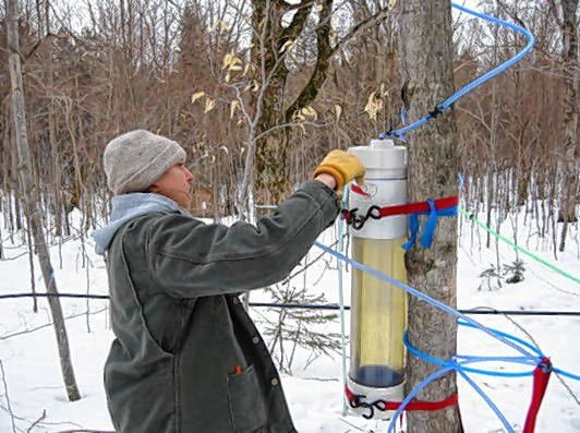 ( TESTING, TESTING Research gets underway at UVM's Proctor Maple Research Center.