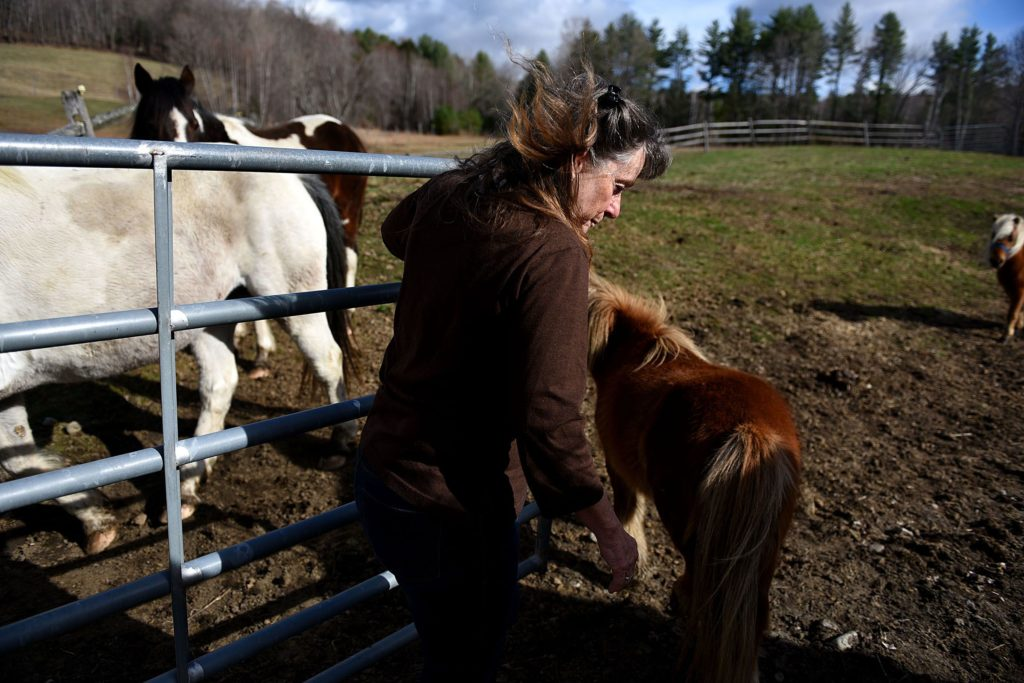 Kathy Williams, of Thetford, Vt., moves her horses to their daytime pasture on April 17, 2017. Williams and her husband, David, recieved a phone call from a person claiming to be calling from Dish Network asking for her credit card number. (Valley News - Jennifer Hauck) Copyright Valley News. May not be reprinted or used online without permission. Send requests to permission@vnews.com.