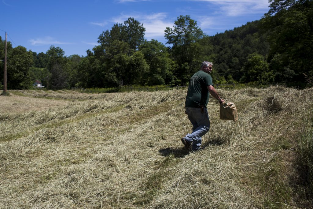 "After loading his baler, Pomfret resident Miller Hewitt carries a bag of twine through a field of raked dry hay toward his truck in Pomfret, Vt., on July 5, 2016. Hewitt, who raises Black Angus cows and runs the butcher block at Mac's Market in Woodstock, was taking advantage of the recent dry spell and preparing to bale a large amount of dry hay with his brother Chandler. ""It's not usually like this,"" he said, referring to Vermont's summer weather. (Valley News - Mac Snyder) Copyright Valley News. May not be reprinted or used online without permission. Send requests to permission@vnews.com."