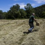 The Business of Agriculture: Cold, Wet Weather Delays Hay Harvest, Reduces Quality