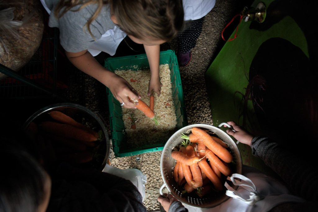 Remy Malik, 11, left, Ada Mahood, 10, middle, and Claudia Schoemaker, 12, load up containers of carrots in Woodstock Elementary School's root cellar to prepare for the cafeteria salad bar in Woodstock, Vt., Tuesday, Oct. 24, 2017. (Valley News - James M. Patterson) Copyright Valley News. May not be reprinted or used online without permission. Send requests to permission@vnews.com.