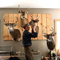 Made in the Upper Valley: The art of taxidermy brings visions of luxury and learning to life