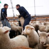 Business of Agriculture: On the farm, the end of life is commonplace and easy