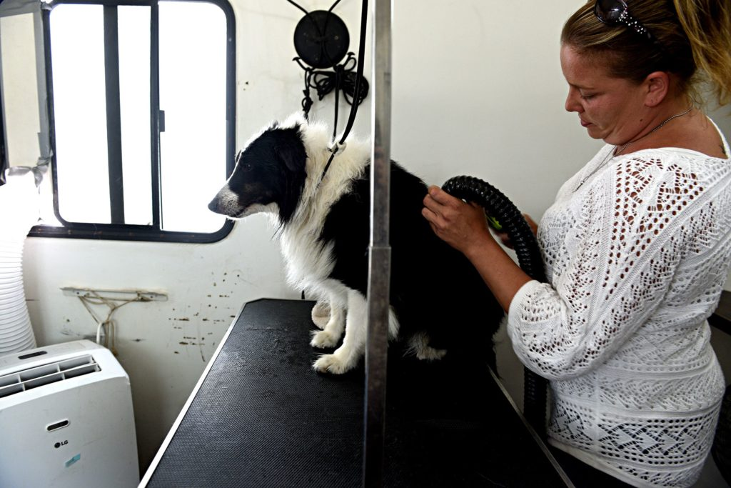 After a bath, Samantha Stanford blow dries Smokey in her mobile grooming trailer in Canaan, N.H., on Friday, June 28, 2019. (Valley News - Jennifer Hauck) Copyright Valley News. May not be reprinted or used online without permission. Send requests to permission@vnews.com.