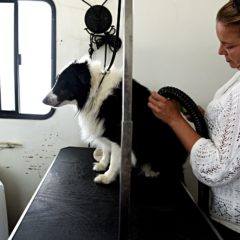 The Exit Interview: Samantha Stanford, Owner and Founder of Dirty Dog Mobile Grooming