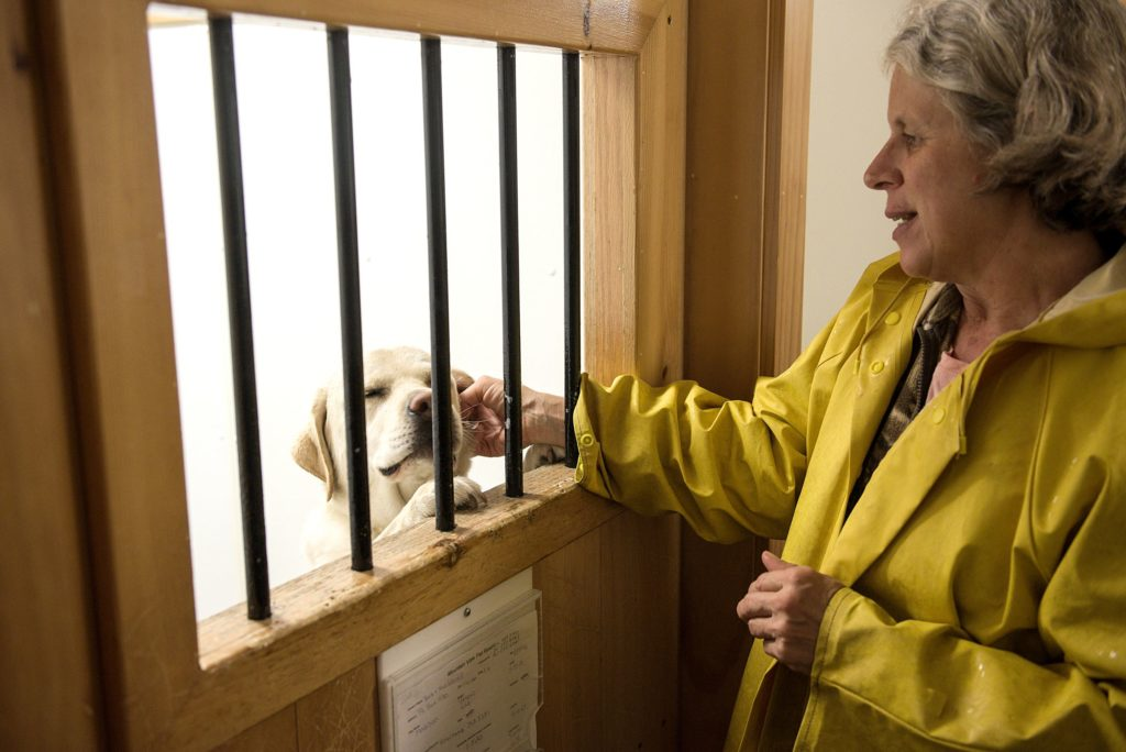 Mary Blain, of Canaan, owner of Mountain View Pet Resort, checks on Madison, a yellow lab, in a room at the daycare and boarding facility in Canaan, N.H., Thursday, Sept., 26, 2019. Blain opened the business in December of 2007. (Valley News - James M. Patterson) Copyright Valley News. May not be reprinted or used online without permission. Send requests to permission@vnews.com.