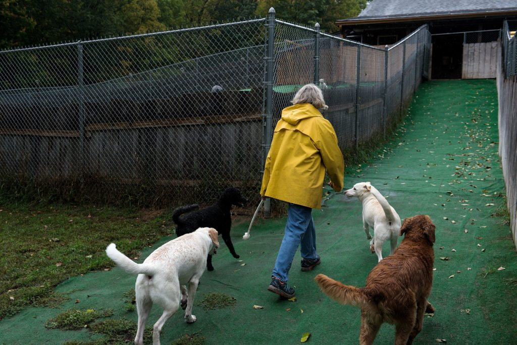 Mary Blain, of Canaan, retreats from the rain after playing fetch with several dogs at Mountain View Pet Resort, a dog boarding and daycare center in Canaan, N.H., Thursday, Sept. 26, 2019. Blain tries to keep the dogs active with two, two-hour play sessions during the day so they go home tired.(Valley News - James M. Patterson) Copyright Valley News. May not be reprinted or used online without permission. Send requests to permission@vnews.com.