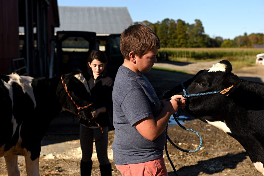 Angus Spence, right, leads his calf Edna at Tullando Farm in Orford , N.H., on Friday, Sept. 27, 2019. Spence along with Ava Rayes, 11, left, holding her calf Fancy, both of Lyme, N.H., are 4-H members. They lease calves from the farm to work with and show at local fairs. (Valley News - Jennifer Hauck) Copyright Valley News. May not be reprinted or used online without permission. Send requests to permission@vnews.com.