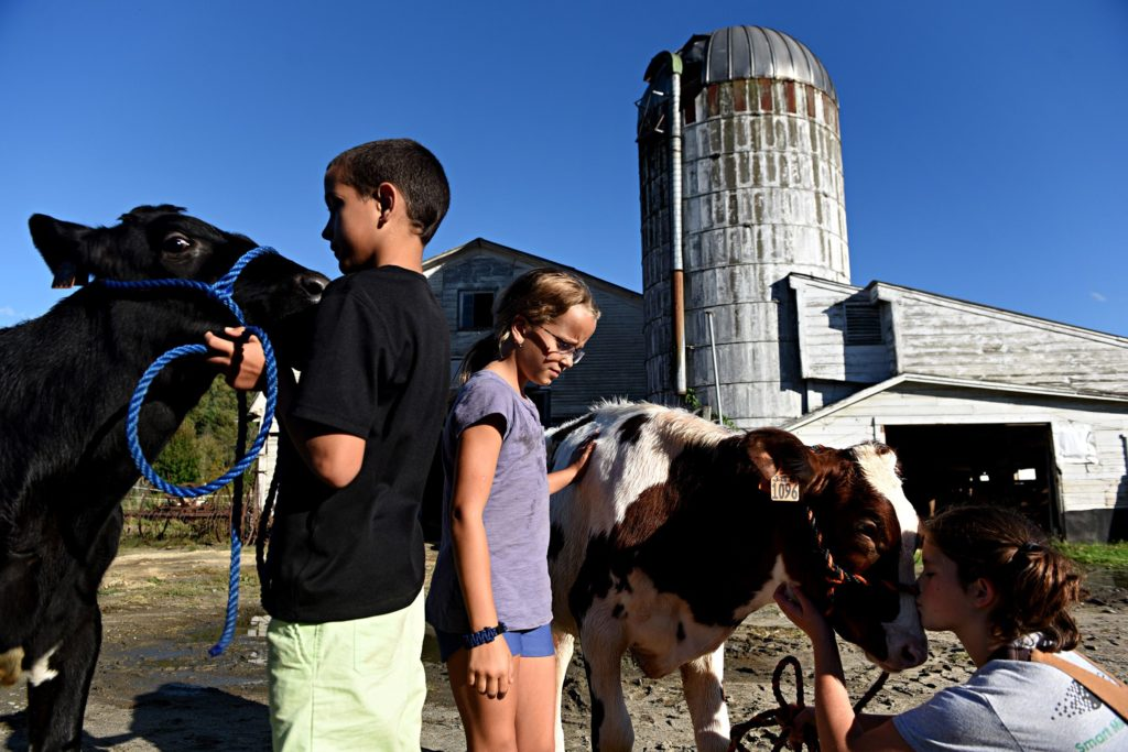 Tanner LaHaye, 10, holds his calf Peluca at Tullando Farm in Orford, N.H., on Friday, Sept. 27, 2019. Ella Tullar, 12, gives her calf Honor a kiss, Eila LaHaye walks between the calves, all live in Lyme, N.H. Tullando is owned by Tullar's family. The farm leases calves to 4-H members  so they can care for them and show them in local fairs.  (Valley News - Jennifer Hauck) Copyright Valley News. May not be reprinted or used online without permission. Send requests to permission@vnews.com.