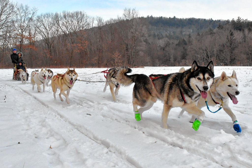 Lead dogs Balsam and Maddie run along a field while giving a ride to guests Crystal Guevara and her son Marquis, 12, of Middletown, Del., while being guided by musher Natalie Thorn, of Windsor, Vt., in Claremont. N.H., on Sunday, Dec. 22, 2019. (Rick Russell photograph)