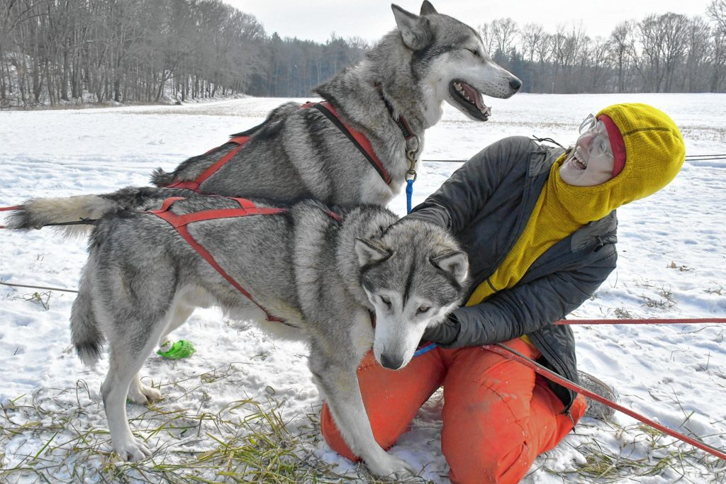 Mushing intern Crystal Whyte, of Rochester, N.Y., plays with Jetfire while Tanka, above, begs for attention while doing a day of excursion trips with Braeburn Siberians of Windsor, Vt., along the Connecticut River in Claremont, N.H., on Sun. Dec. 22, 2019. (Rick Russell photograph)