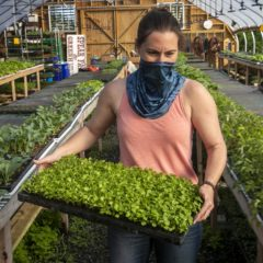 Business of Agriculture: Farm-to-table dining takes on new meaning amid pandemic