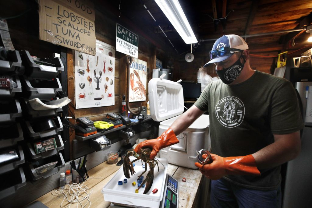 In this Friday, May 29, 2020 photo, Eric Pray weighs a lobster in his garage in Portland, Maine. The coronavirus shutdown has prompted Pray to that selling his product direct to customers. (AP Photo/Robert F. Bukaty)