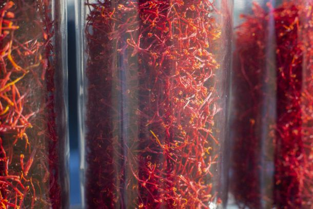 Dried saffron cultivated by Sean Linley in Barre on Friday, November 6, 2020. Photo by Glenn Russell/VTDigger