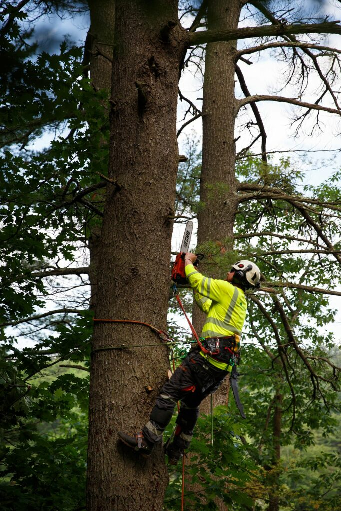 Nathaniel Moore, of Canaan, N.H., cuts down branches from a tree slated for removal by a Chippers, Inc. crew at a home in Hanover, N.H., on Wednesday, June 30, 2021. (Valley News / Report For America - Alex Driehaus) Copyright Valley News. May not be reprinted or used online without permission. Send requests to permission@vnews.com.